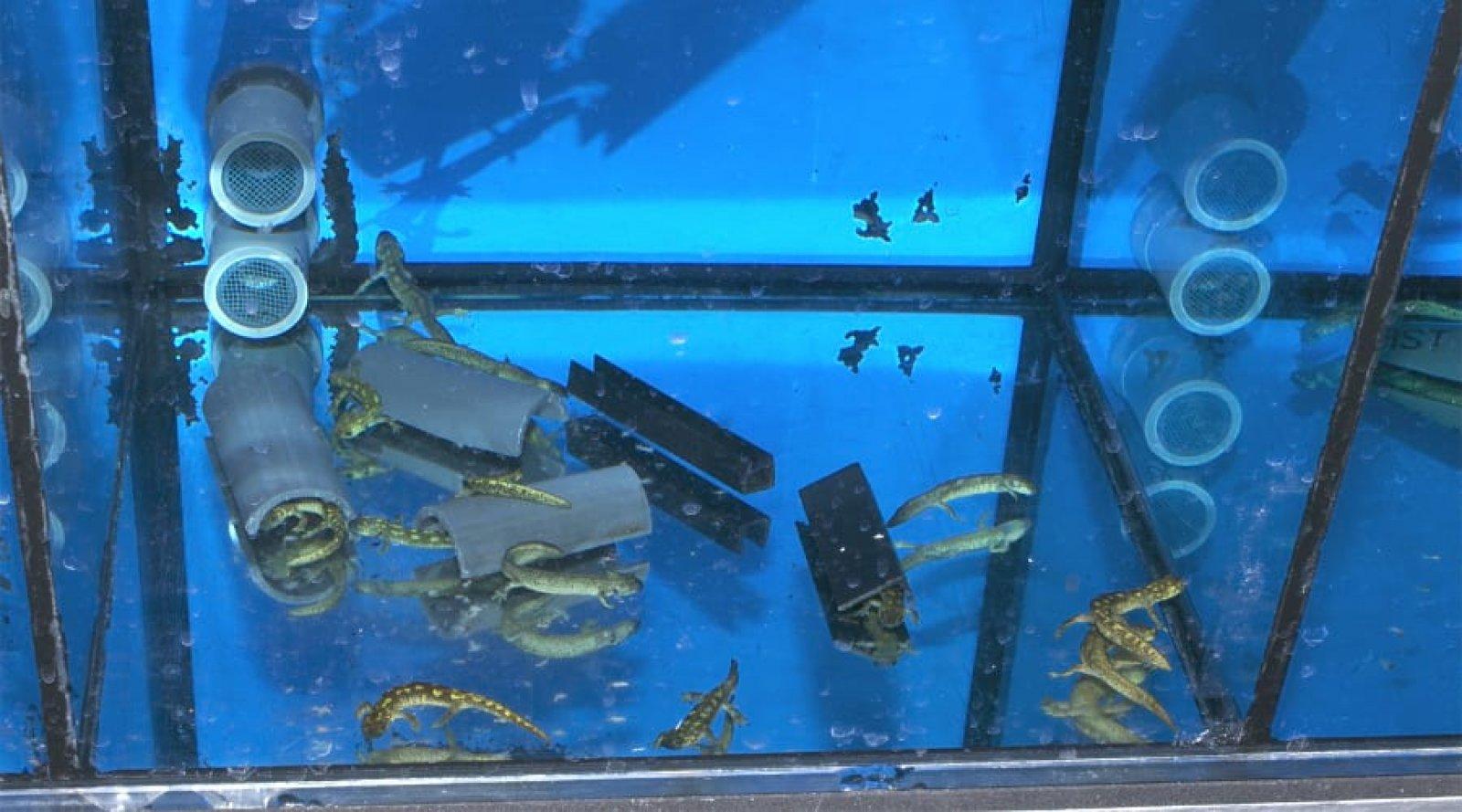Aquari al Centre de Fauna de Torreferrussa