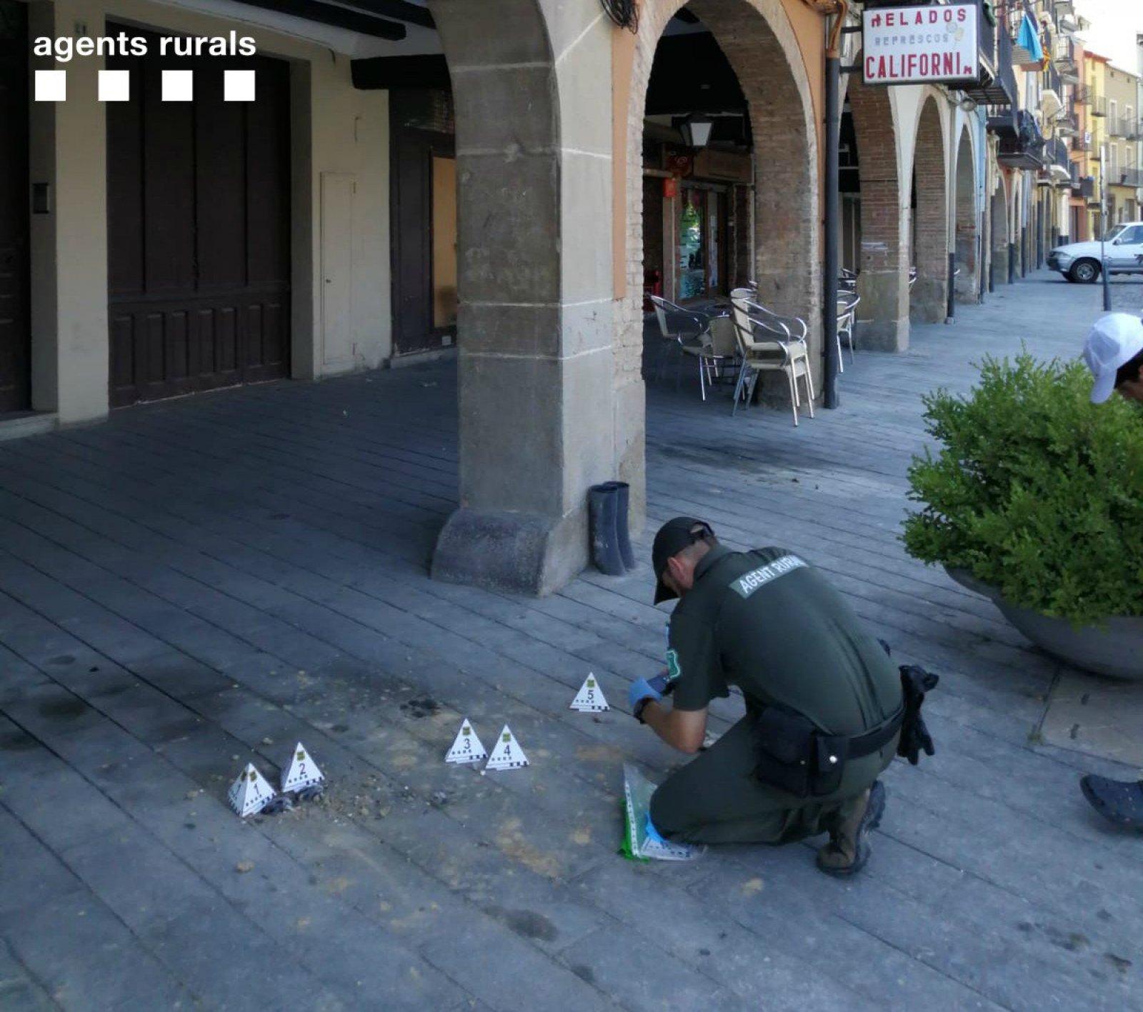 Un agent rural davant l'indret de Balaguer on s'han trobat els nius d'oreneta trencats