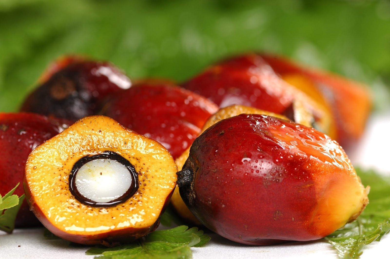 El fruit de la palma què és fa servir per elaborar l'oli de palma