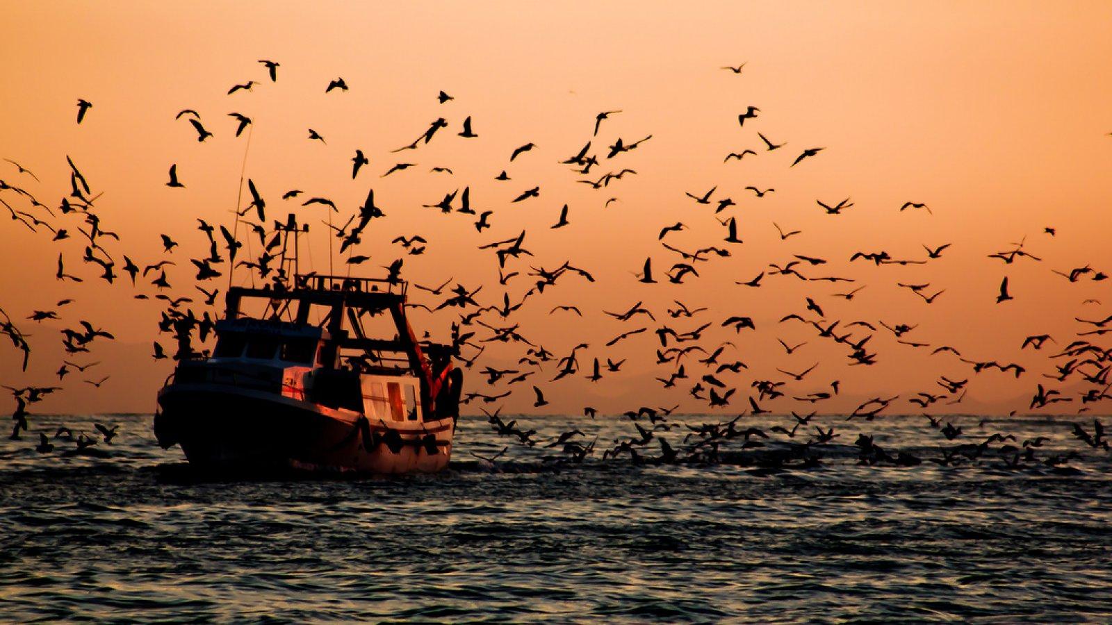 Vaixell pesquer tornant al port al sud de l'estat espanyol