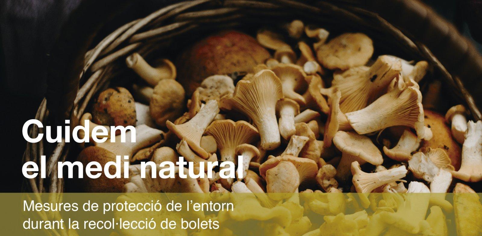 Imatge de la campanya de respecte al medi natural durant la temporada de bolets