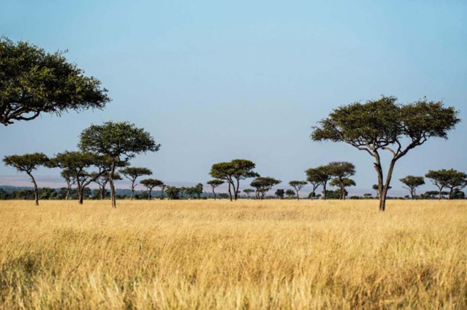 Reserva Nacional de Masai Mara a Kenya