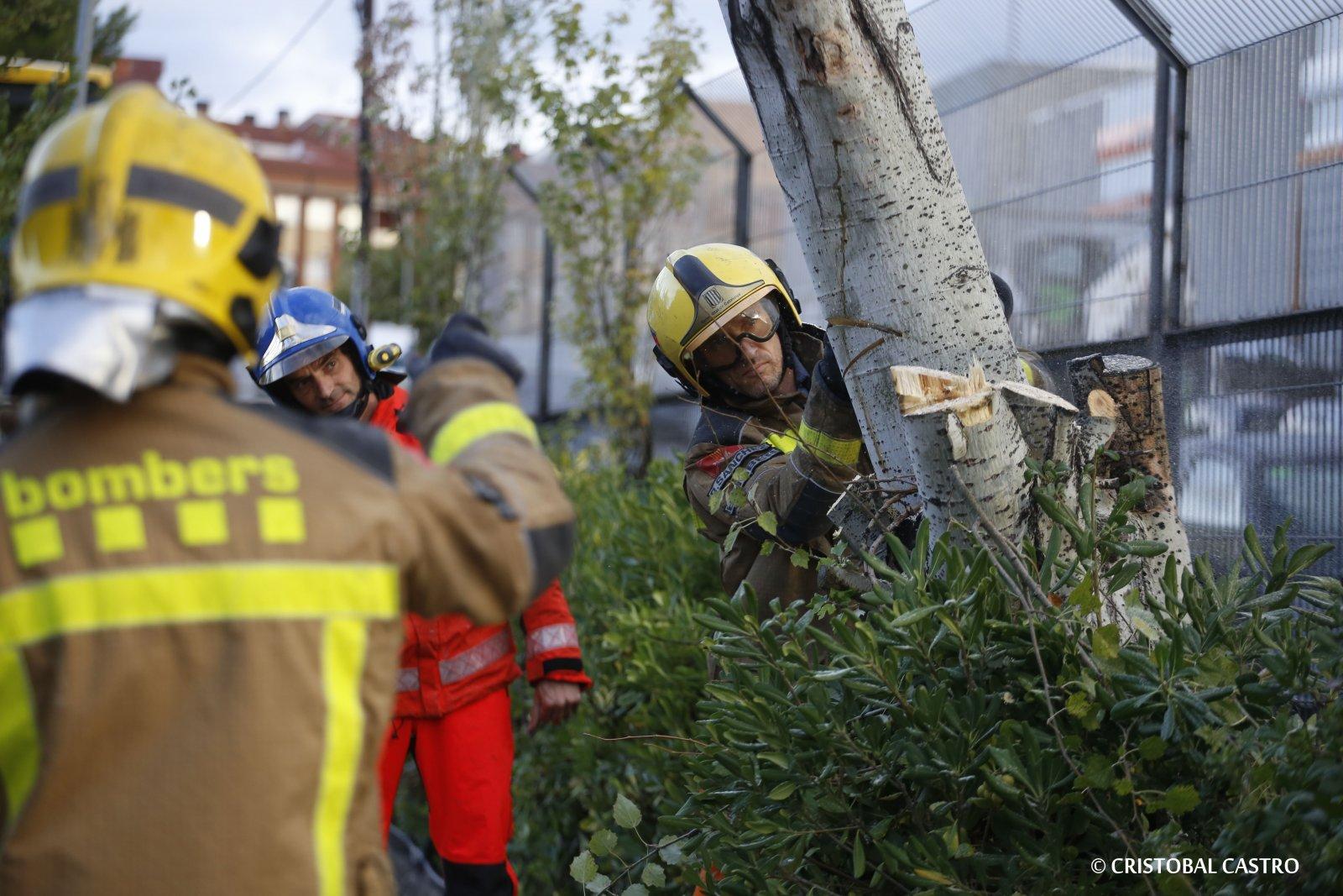 Diversos arbres han quedat malmesos per la força del vent i la pluja