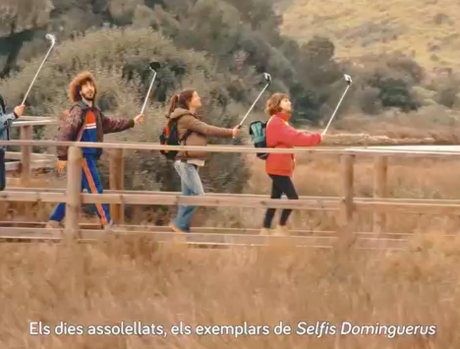 Selfis dominguerus