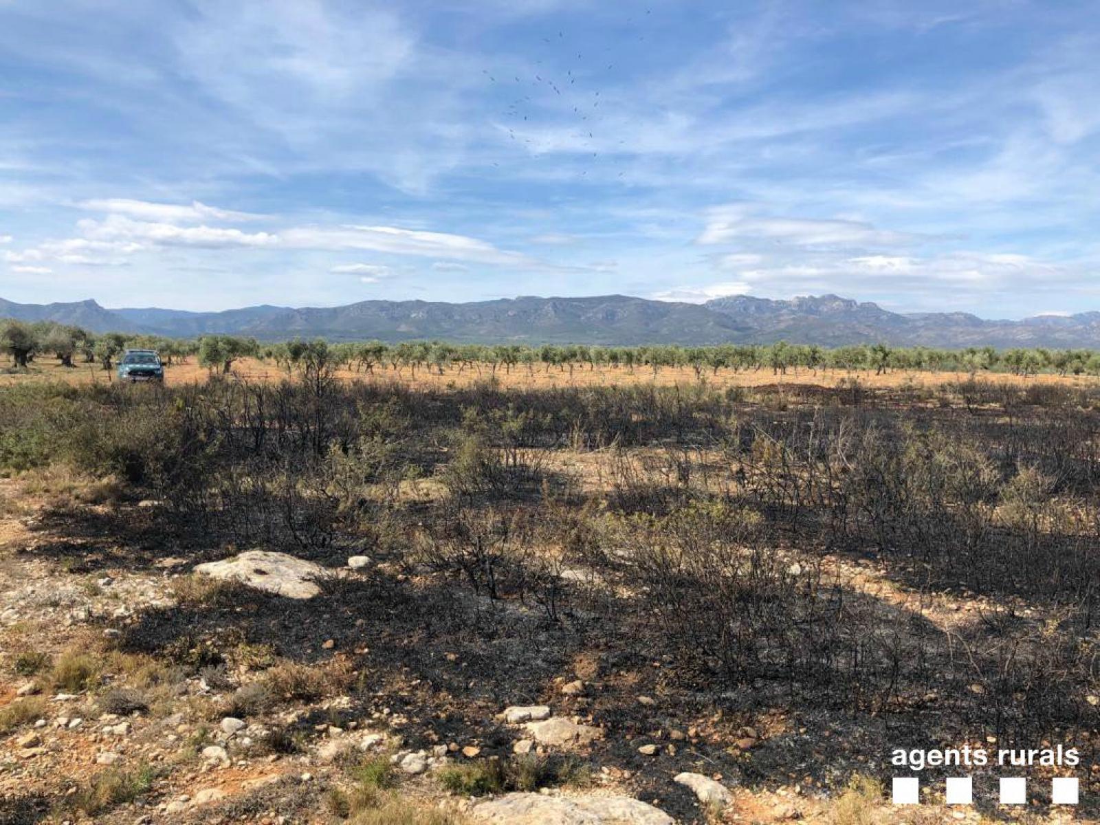 Les restes de l'incendi causat per l'electrocució d'uns voltors a prop d'una granja porcina del Montsià
