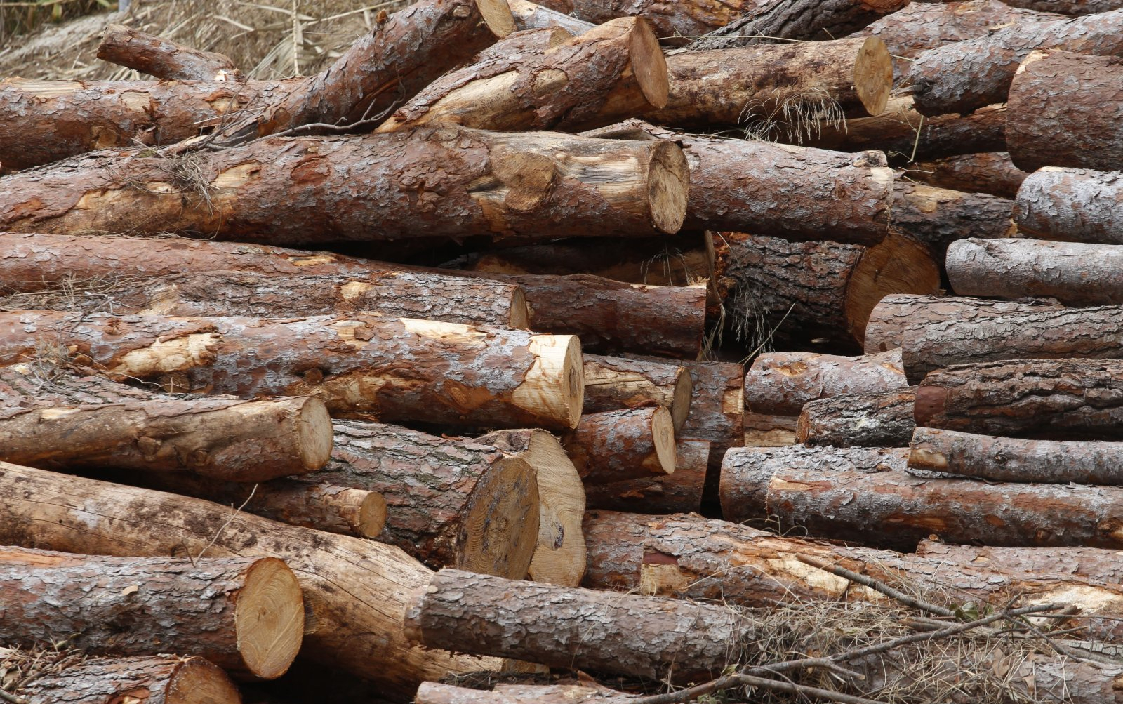 Nou Centre Logístic de Biomassa a Terrassa