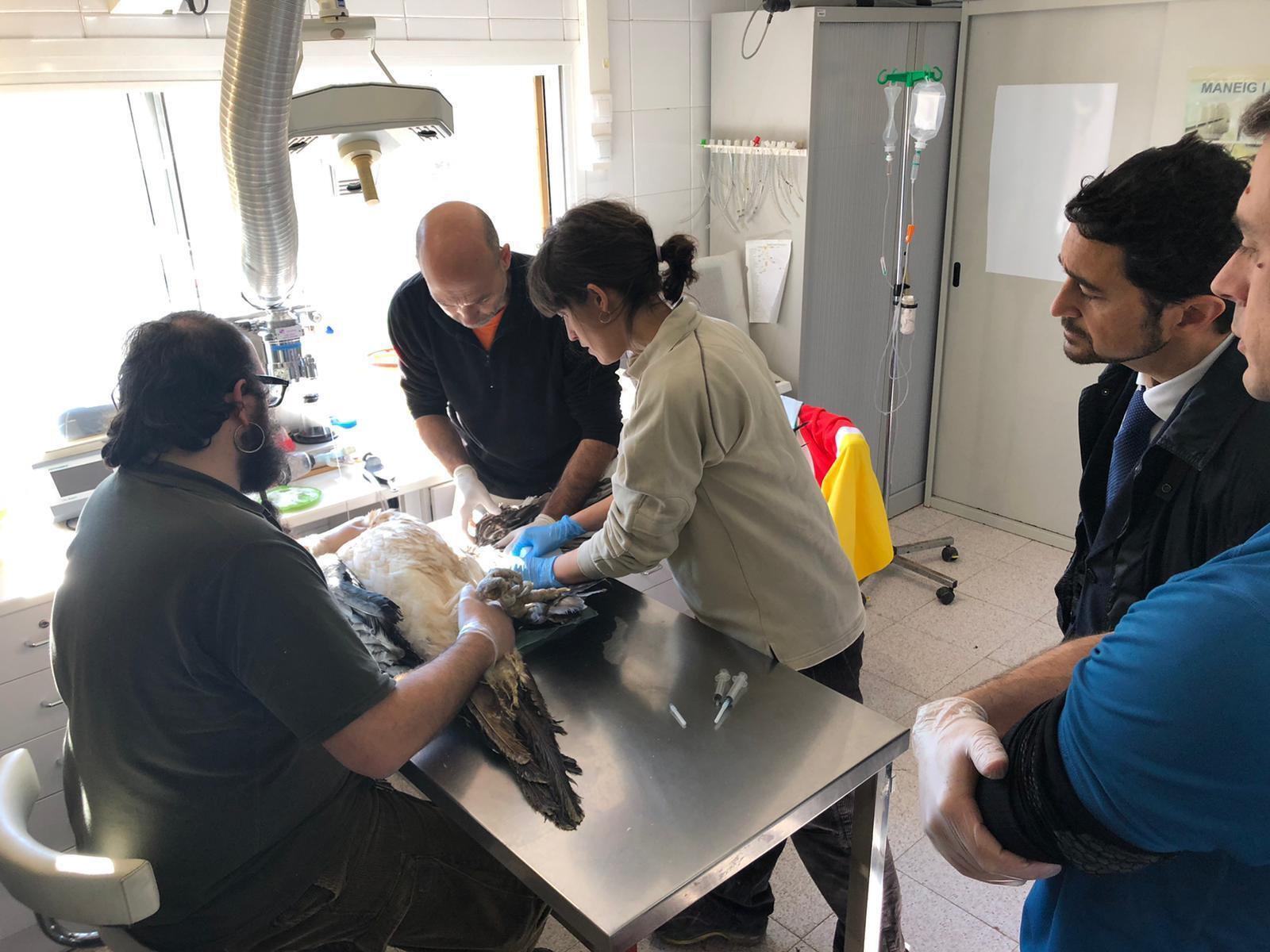 El conseller Calvet observa com atenen un dels animals del Centre de Fauna de Vallcalent durant la visita que va fer a les seves instal·lacions aquest passat divendres
