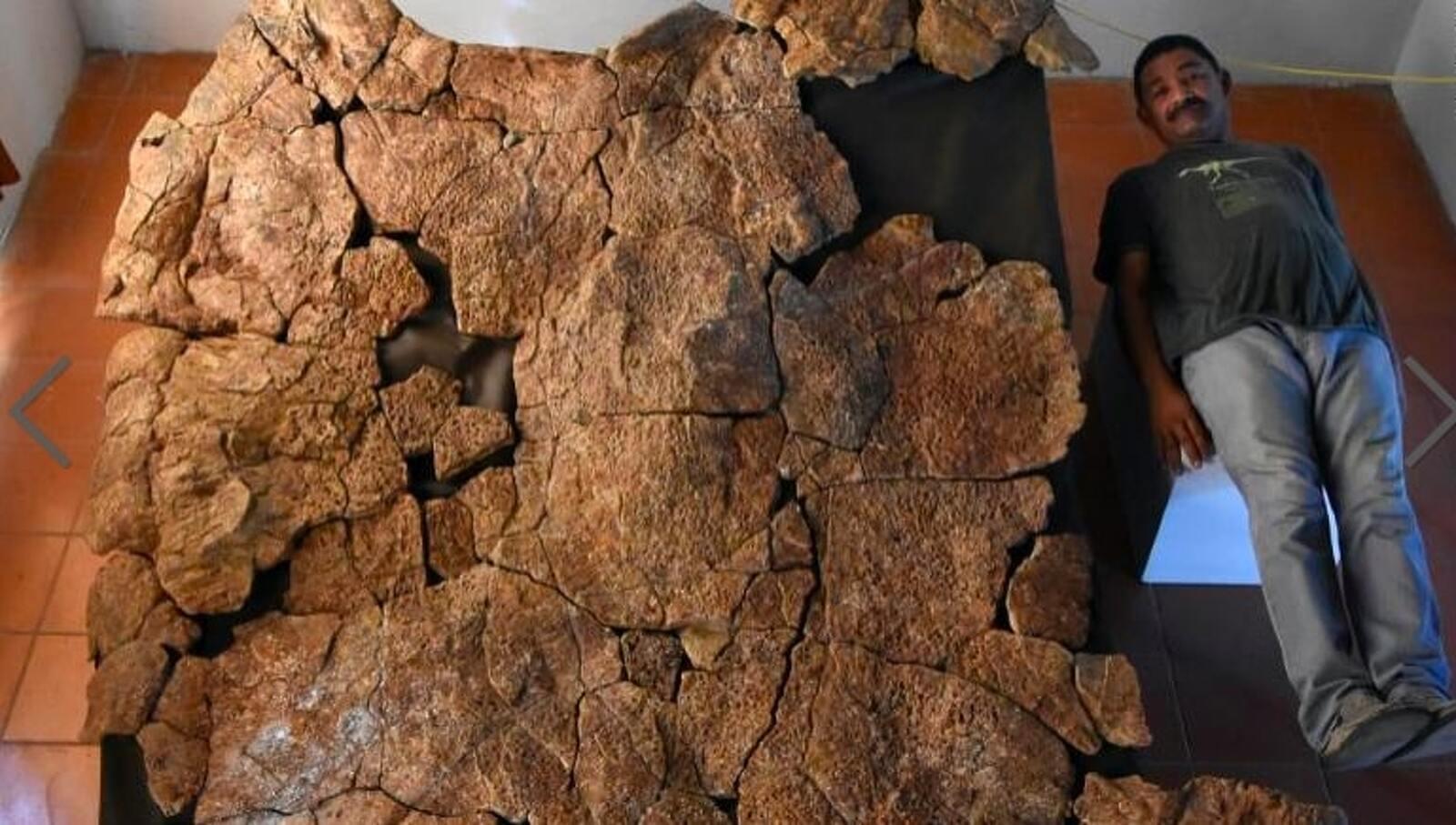El paleontòleg Rodolfo Sánchez al costat d'una de les closques fòssils descobertes