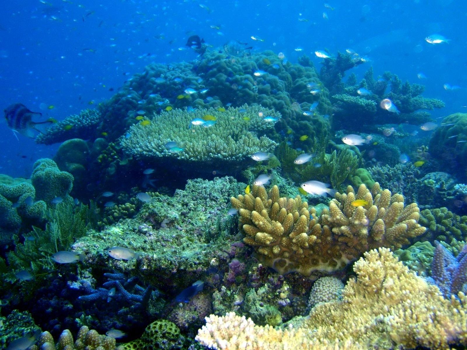 Coralls
