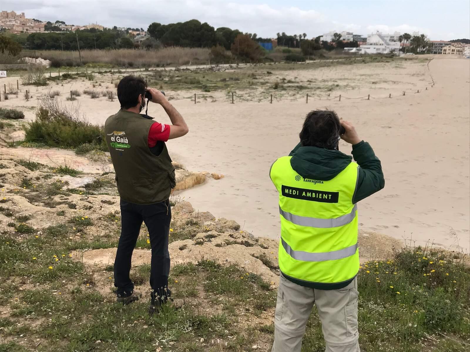 Un tècnic de la regidoria de Medi Ambient de Tarragona i un voluntari de la Sínia inspeccionant la platja de Tamarit