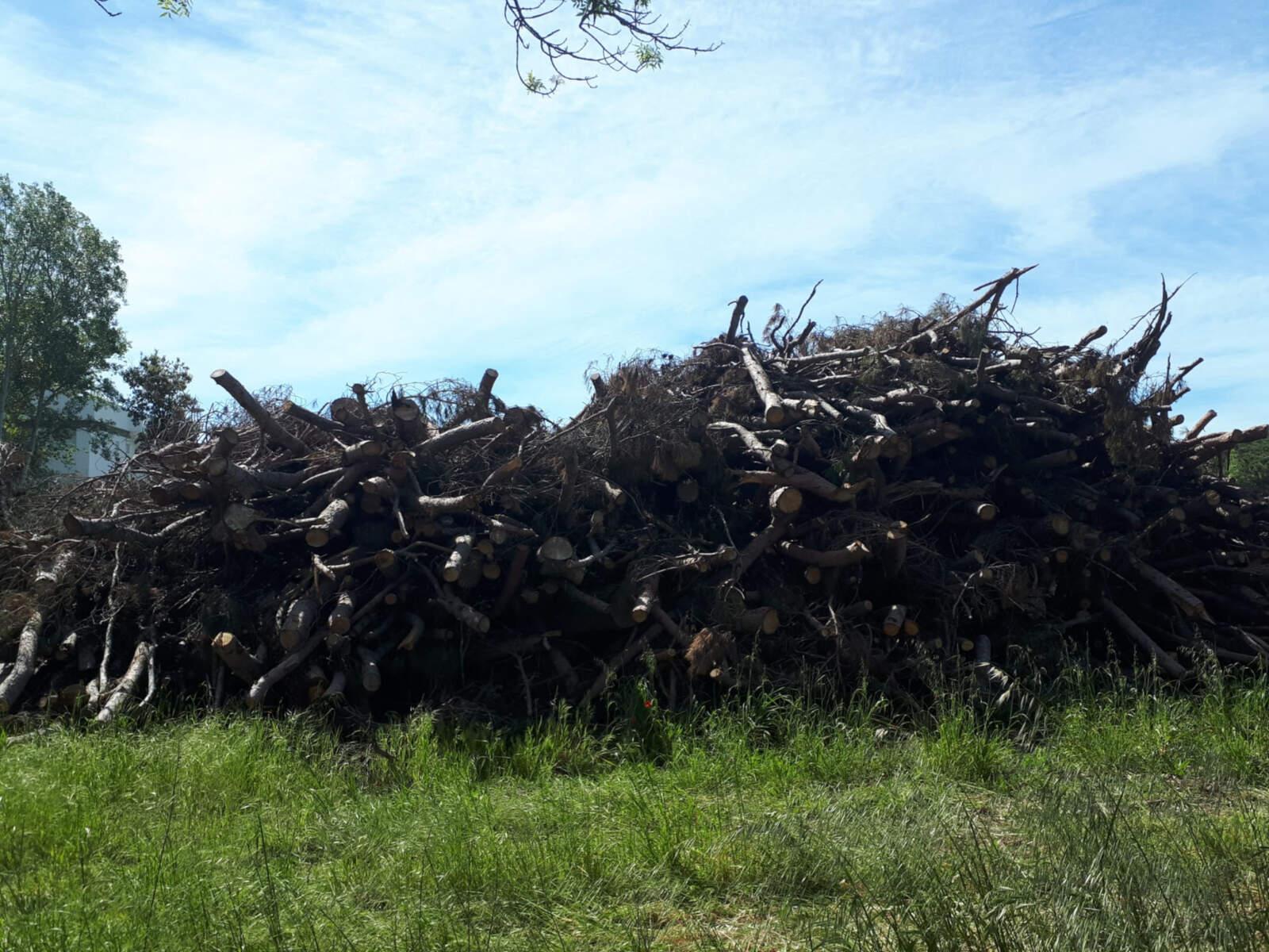 Pila de fusta talada a Pals