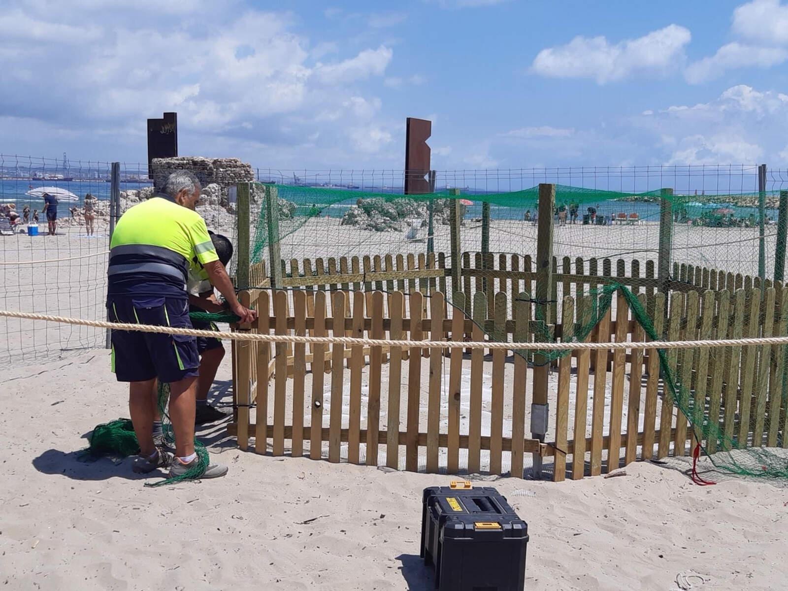 El niu a la platja de la Pineda de Vila-seca
