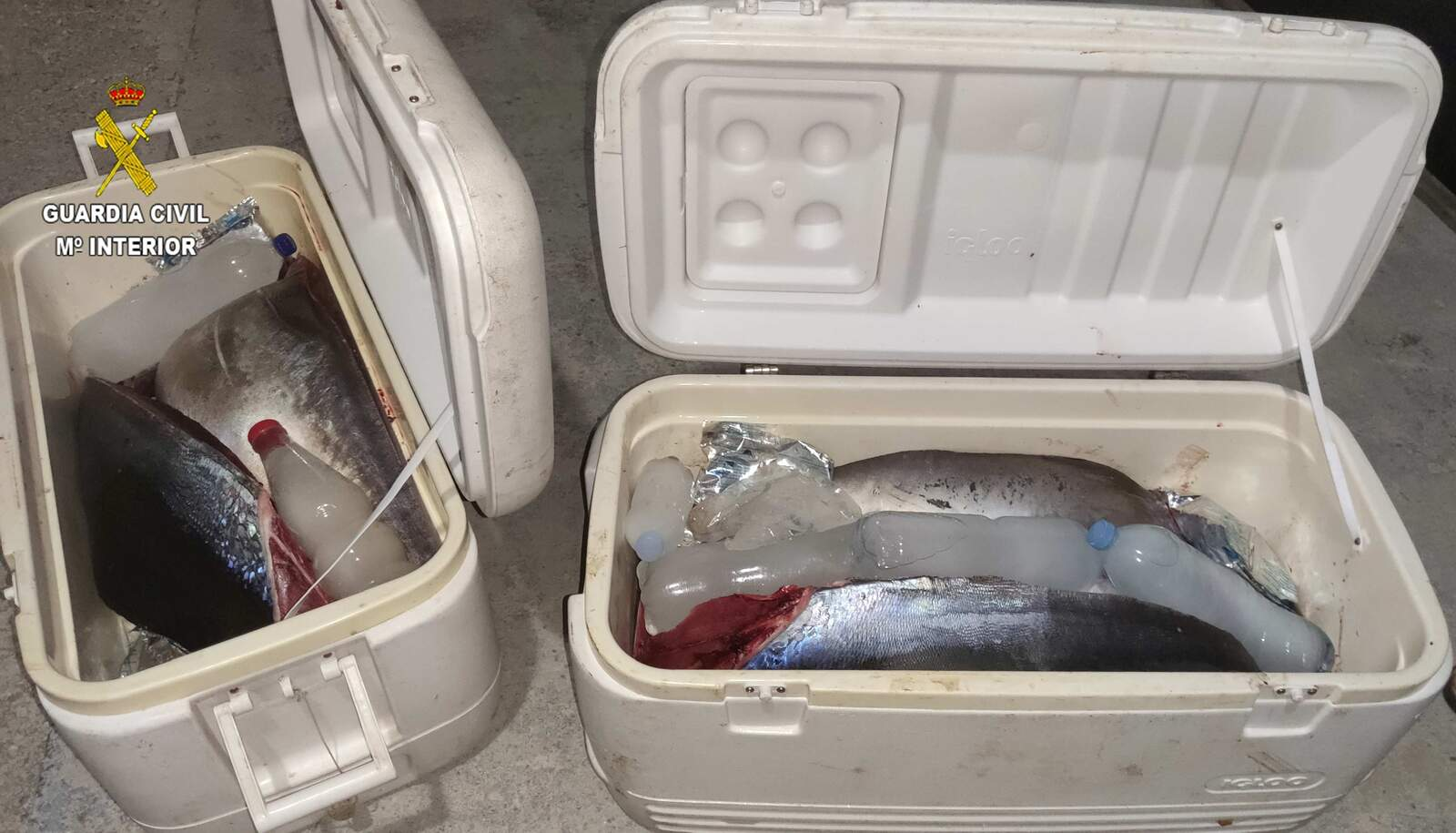 Les tonyines vermelles comissades