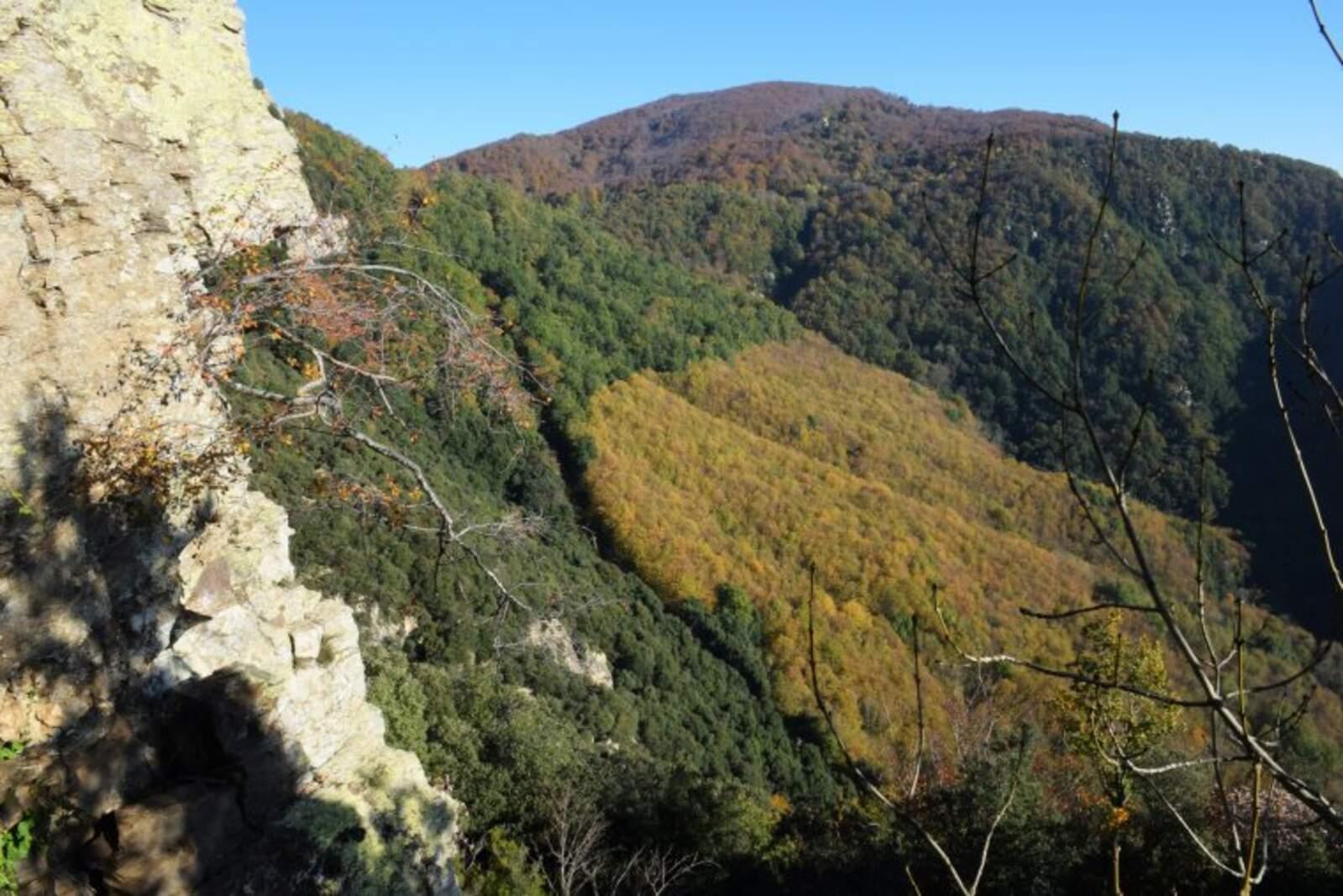 Roureda del Montseny