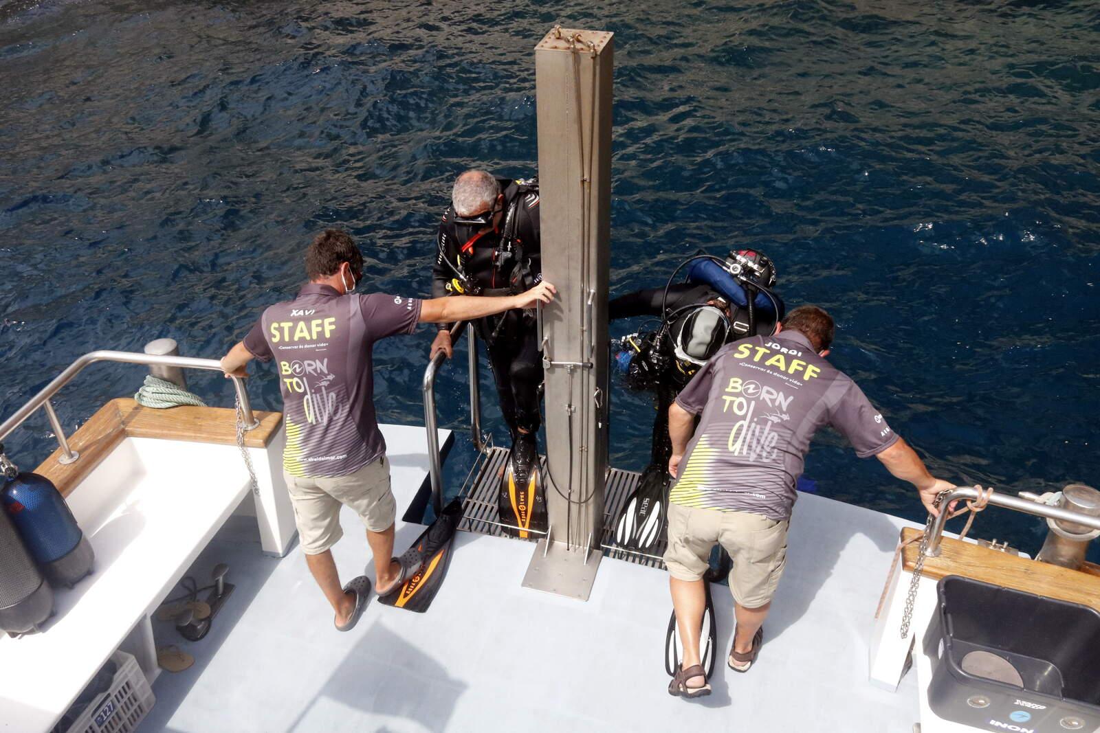 Bussejadors a les illes Medes