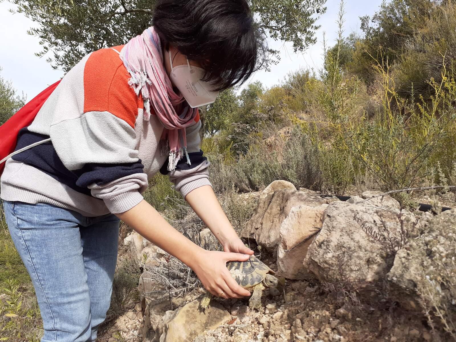 El moment de l'alliberament d'una de les tortugues