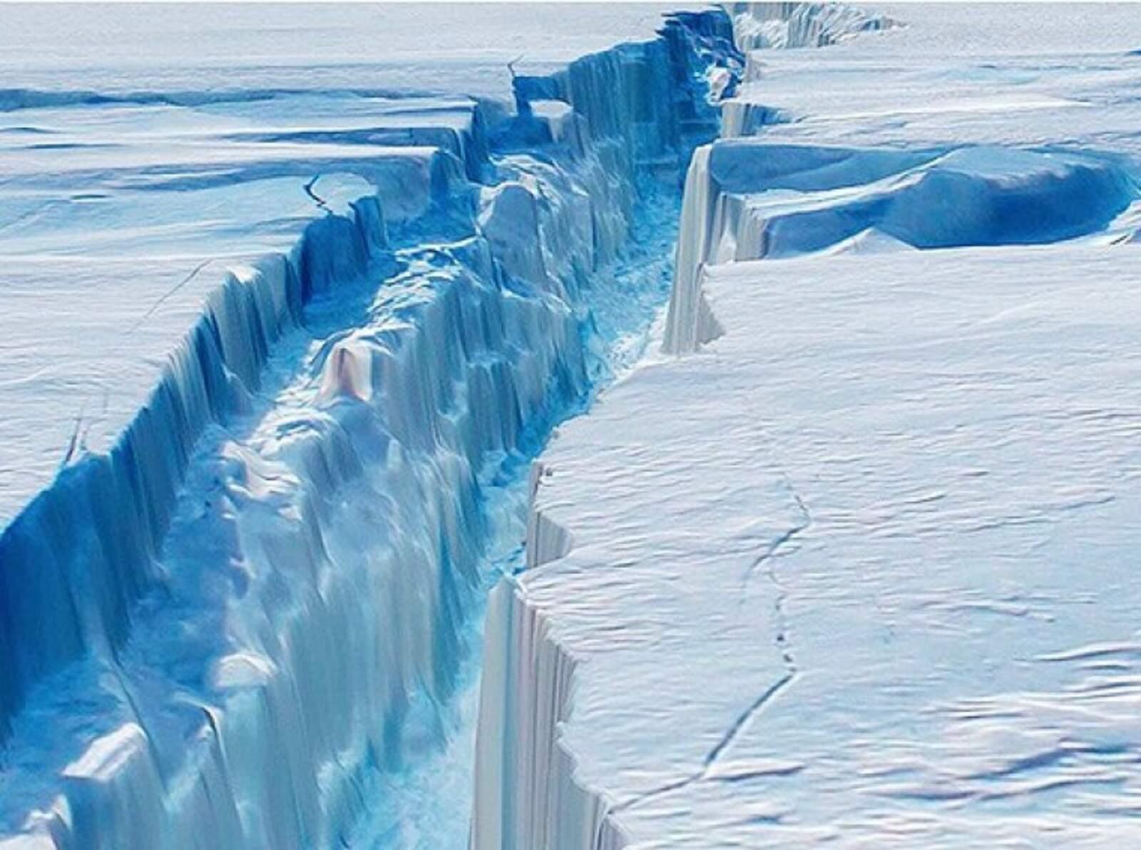 Esquerda gegant al gel de l'Antàrtida