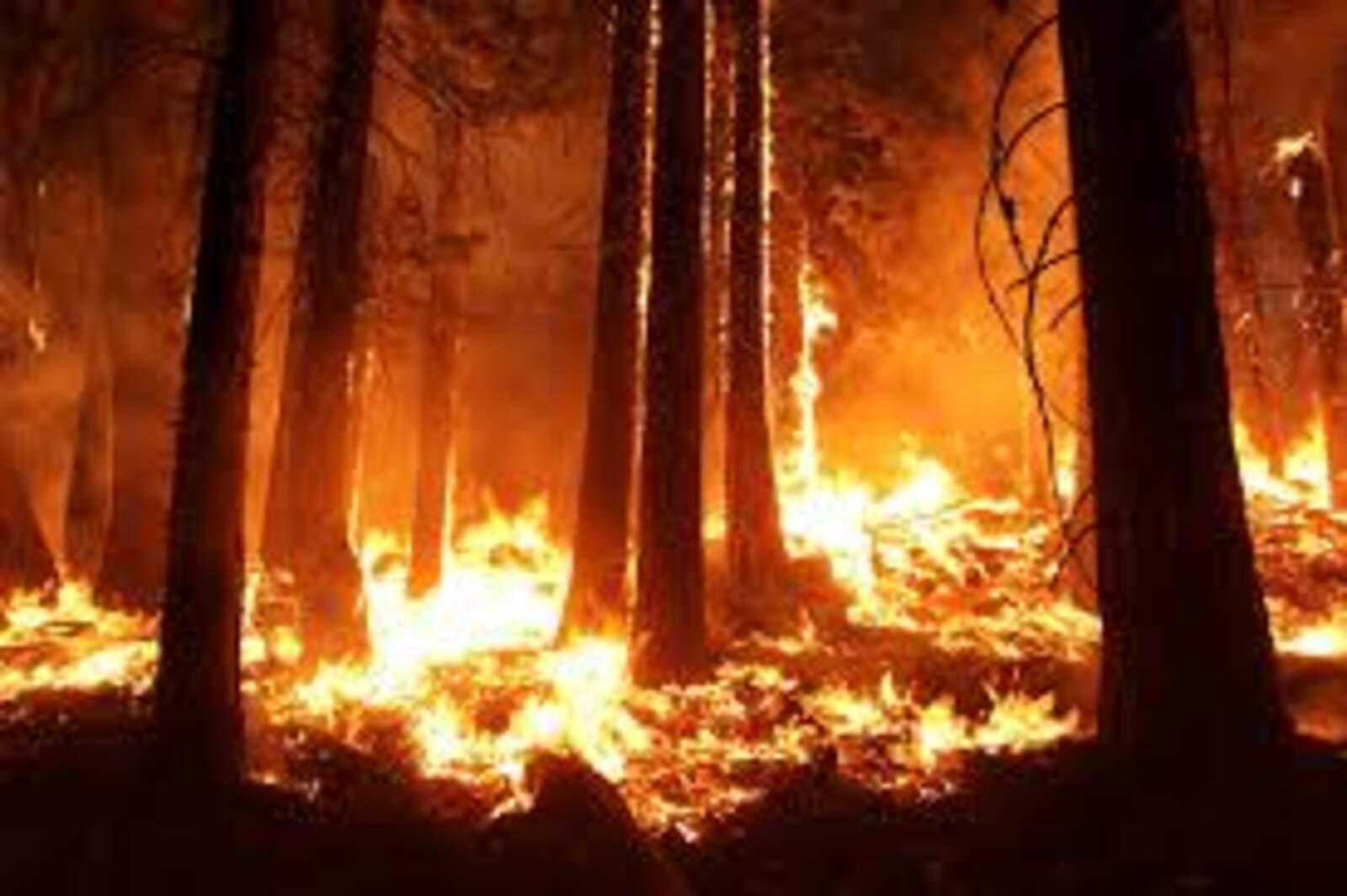 Incendi a la selva