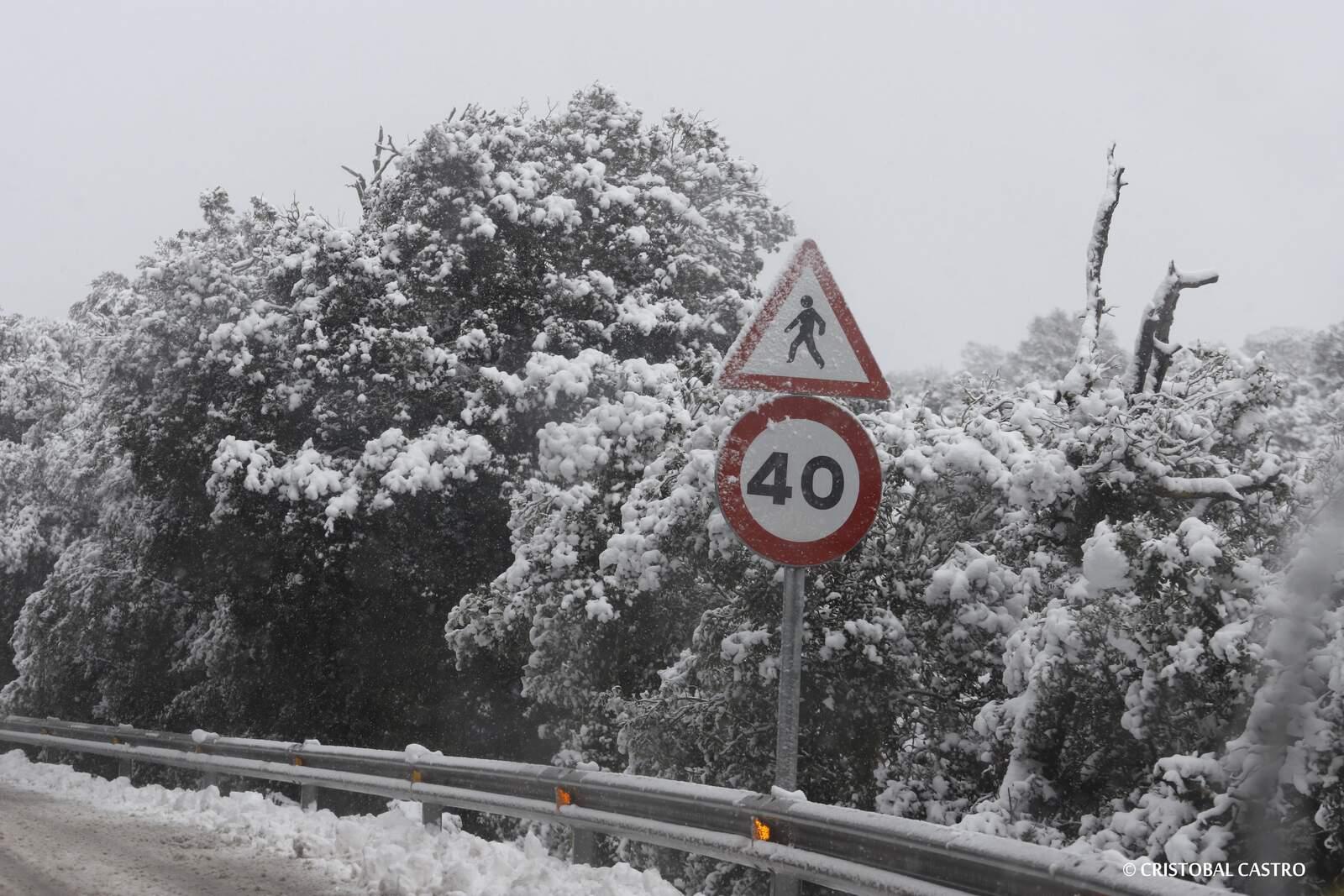 FOTOS Espectaculars de la nevada a Estenalles, Alzina del Sal·lari i carretera de Talamanca