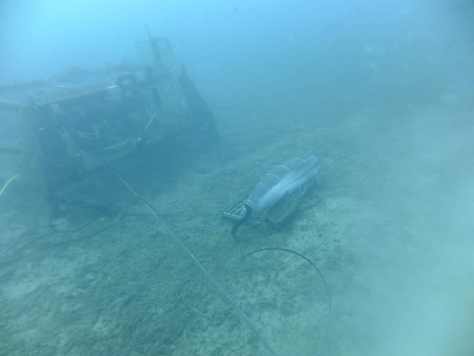 Enfonsament del dofí al fons marí de Vilanova i la Geltrú