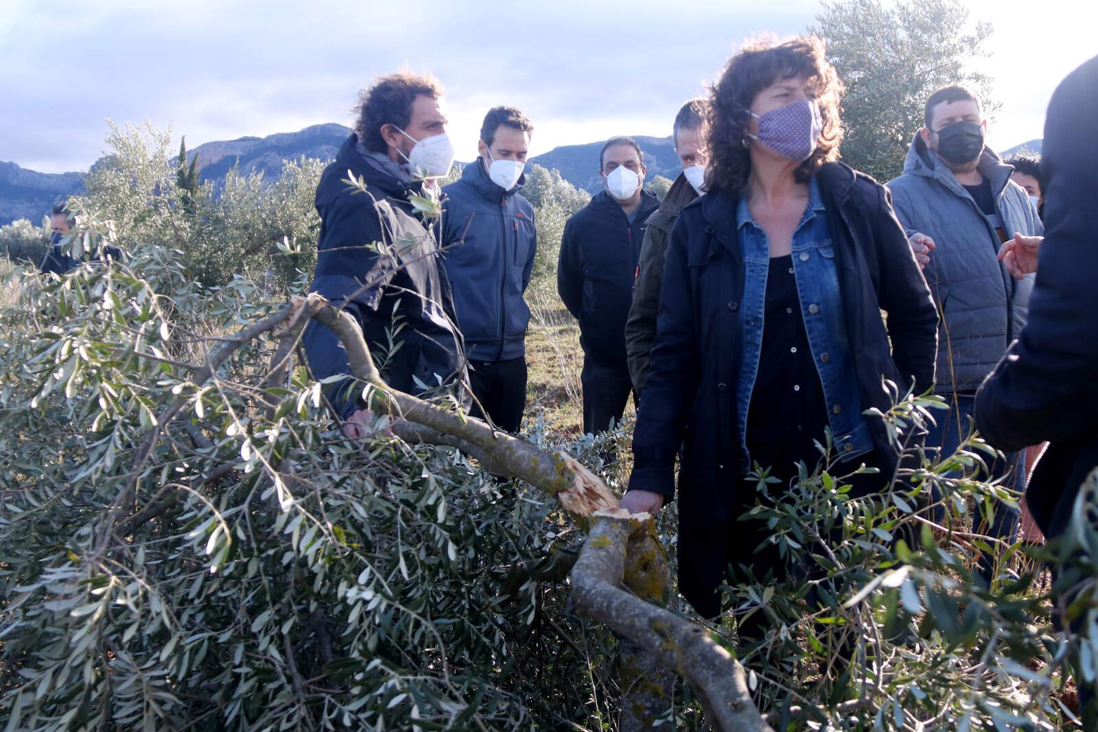 La consellera d'Agricultura, Teresa Jordà, al costat d'una olivera jove trencada pel pes de la neu