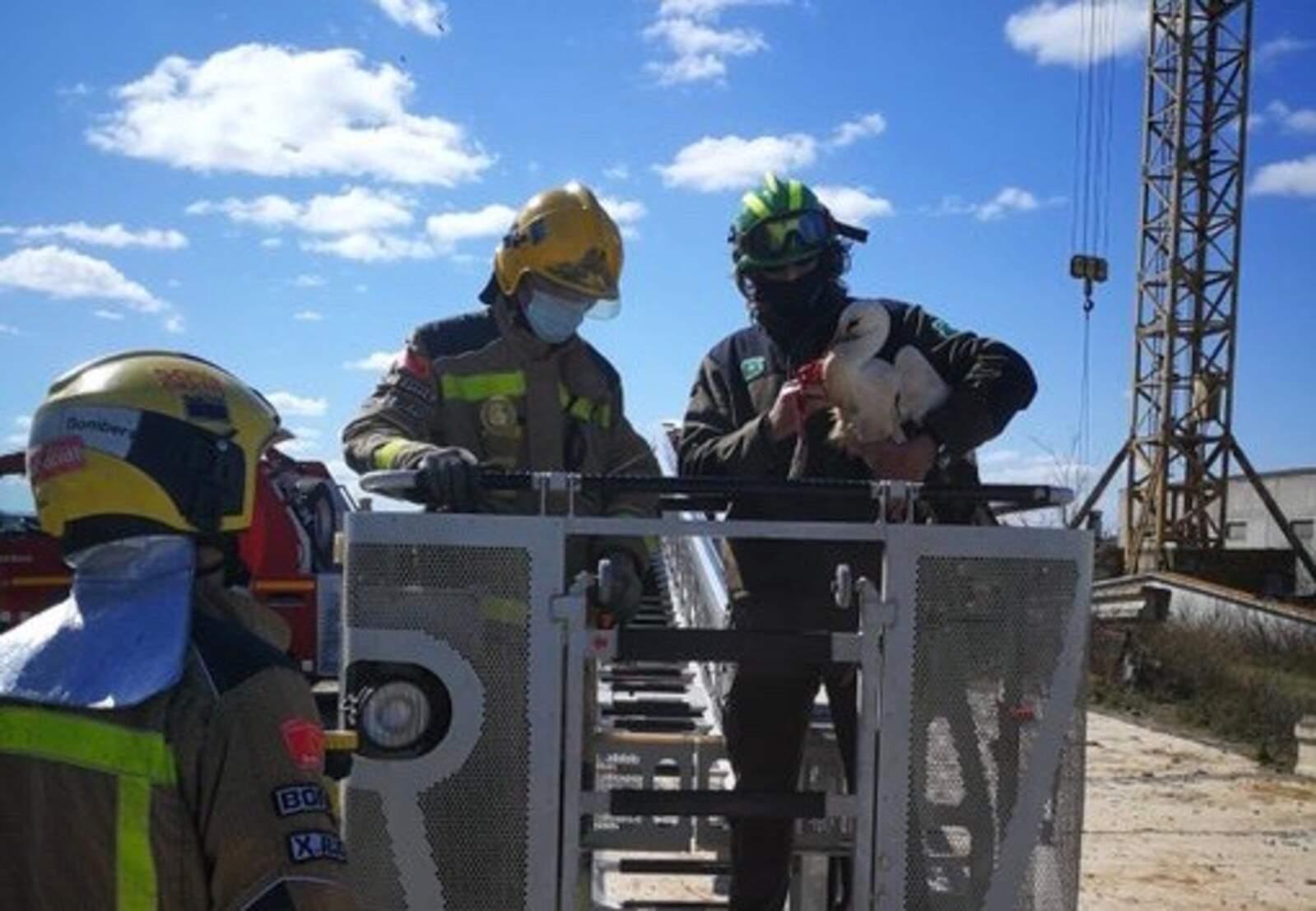 Cigonya rescatada pels Agents Rurals i els Bombers