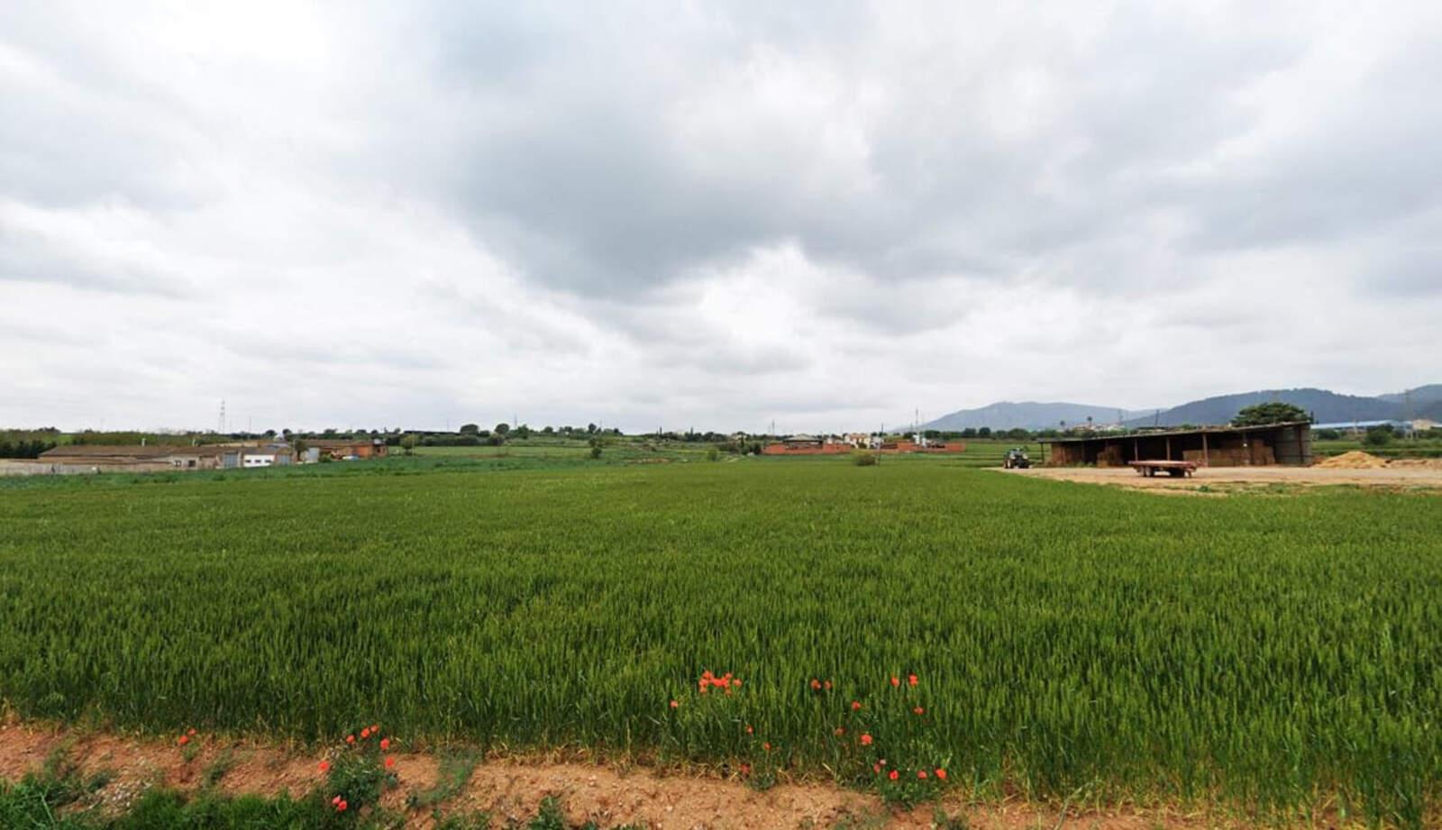 Camps de conreu de cereals a Caldes de Montbui
