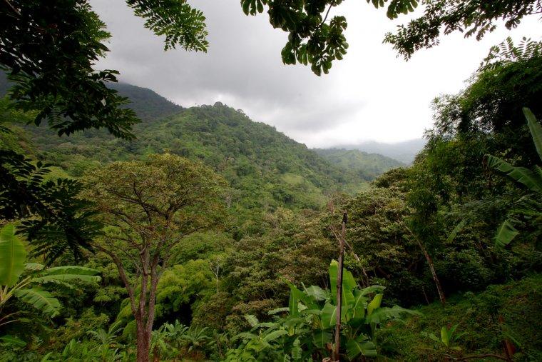 Bosc tropical a Colòmbia  | Mark Rowland (Flickr)