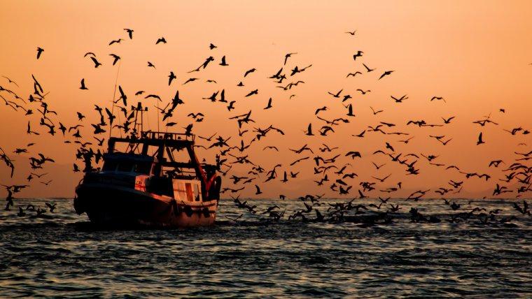 Vaixell pesquer tornant al port al sud de l'estat espanyol    Hernán Piñera (Flickr)