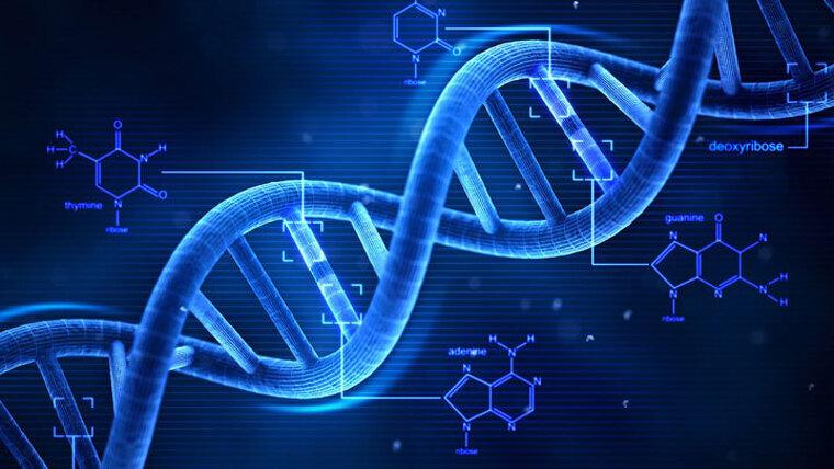 Cadena d'ADN  | Wikimedia Commons