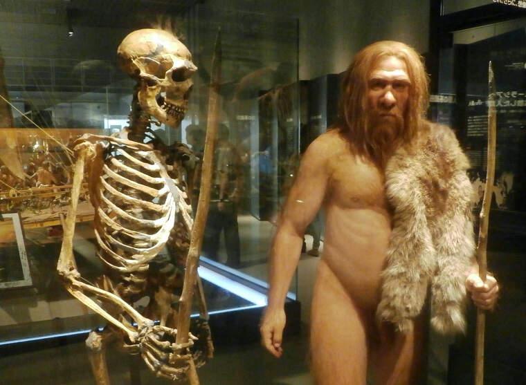 Esquelet i reproducció d'home de Neandertal al Museu Nacional de Ciència i Natura de Tòquio (Japó)    Photaro (CC)