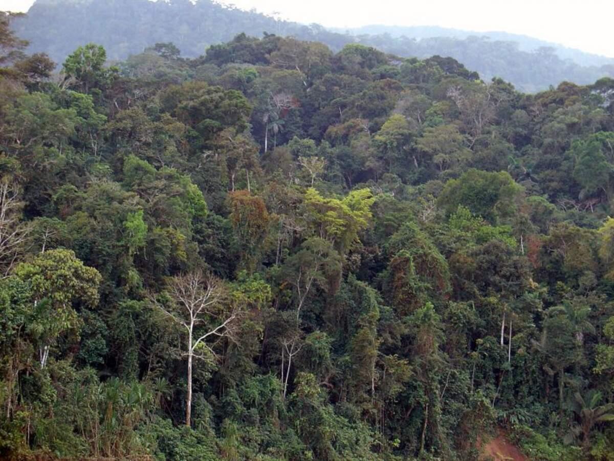 La selva amazònica al Perú    MARTIN ST-AMANT (CC)