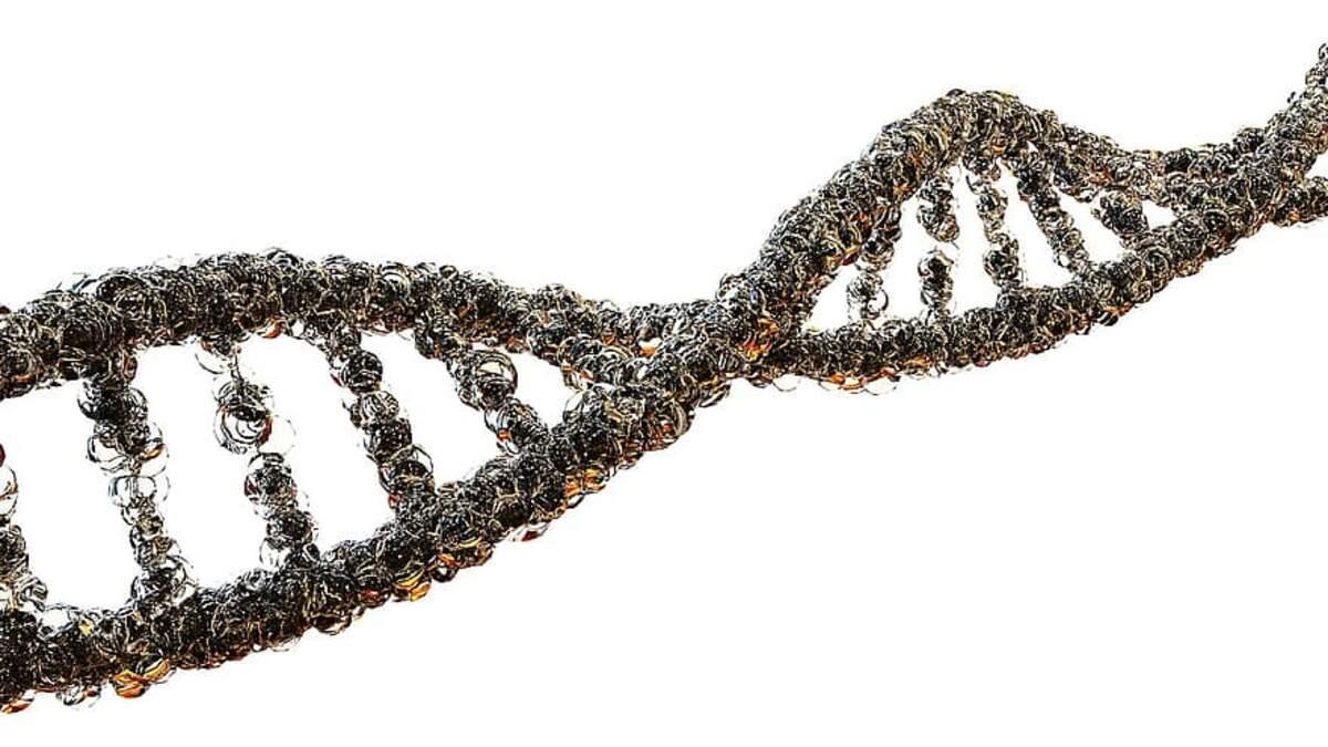 ADN  | Pikist