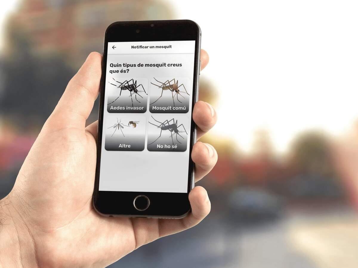 Mosquito Alert  | Mosquito Alert