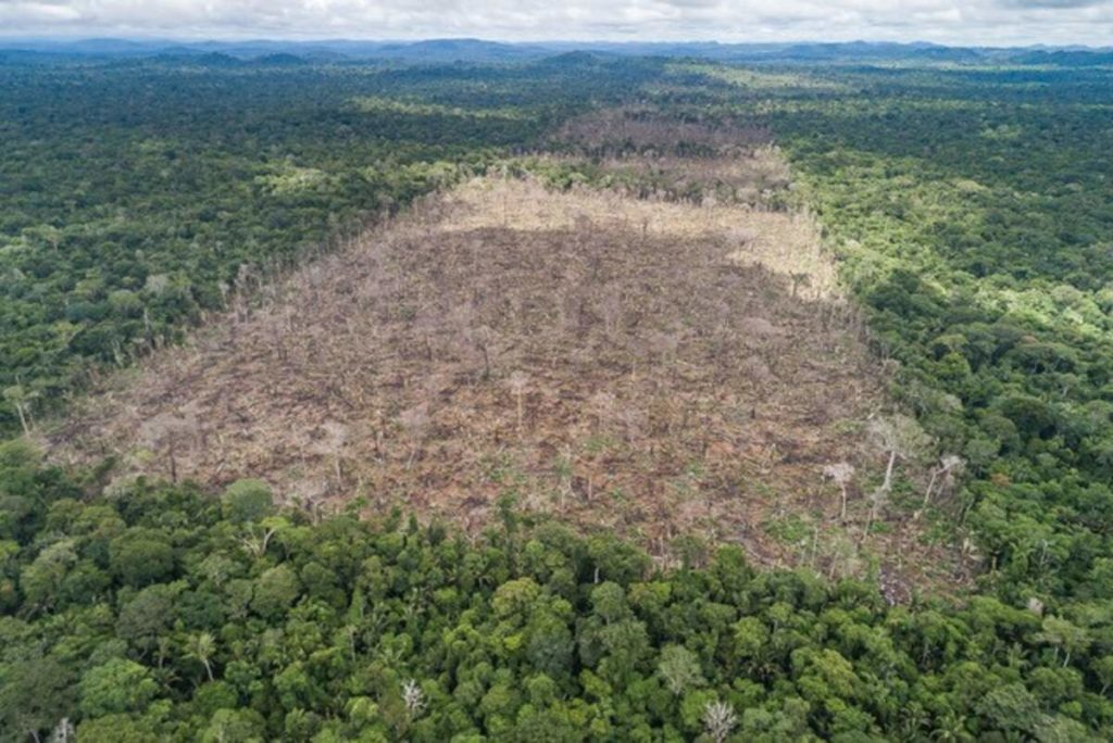 Zona deforestada a l'Amazones  | André Dib