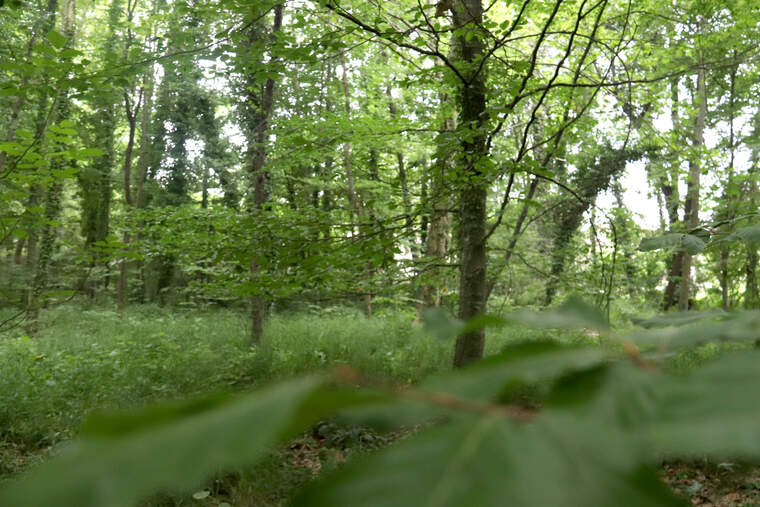 Bosc de la demarcació de Girona  | ACN