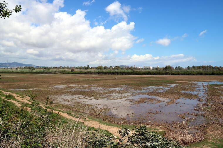 Espai natural del Delta de Llobregat  | ACN