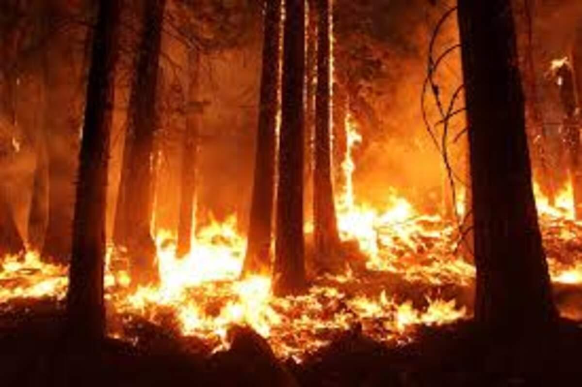 Incendi a la selva  | Pxhere