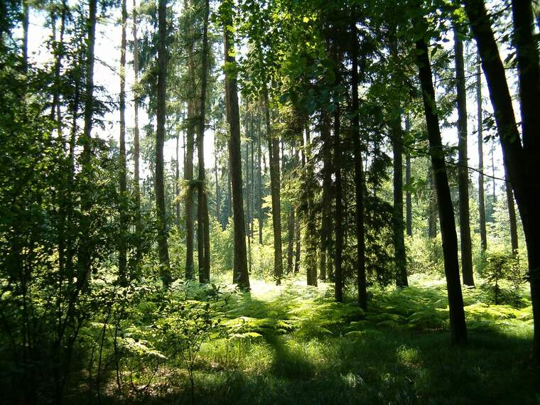 Bosc europeu  | Jiri Brozovsky