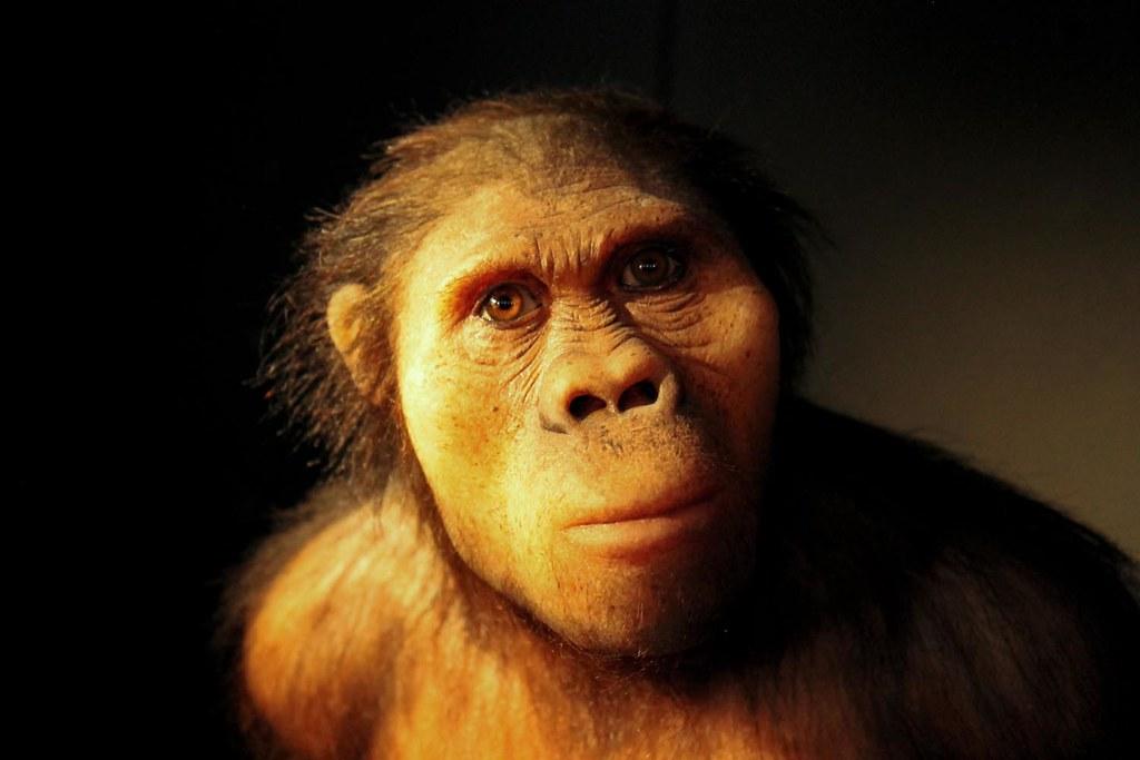 Reproducció d'un australopitec | Flickr