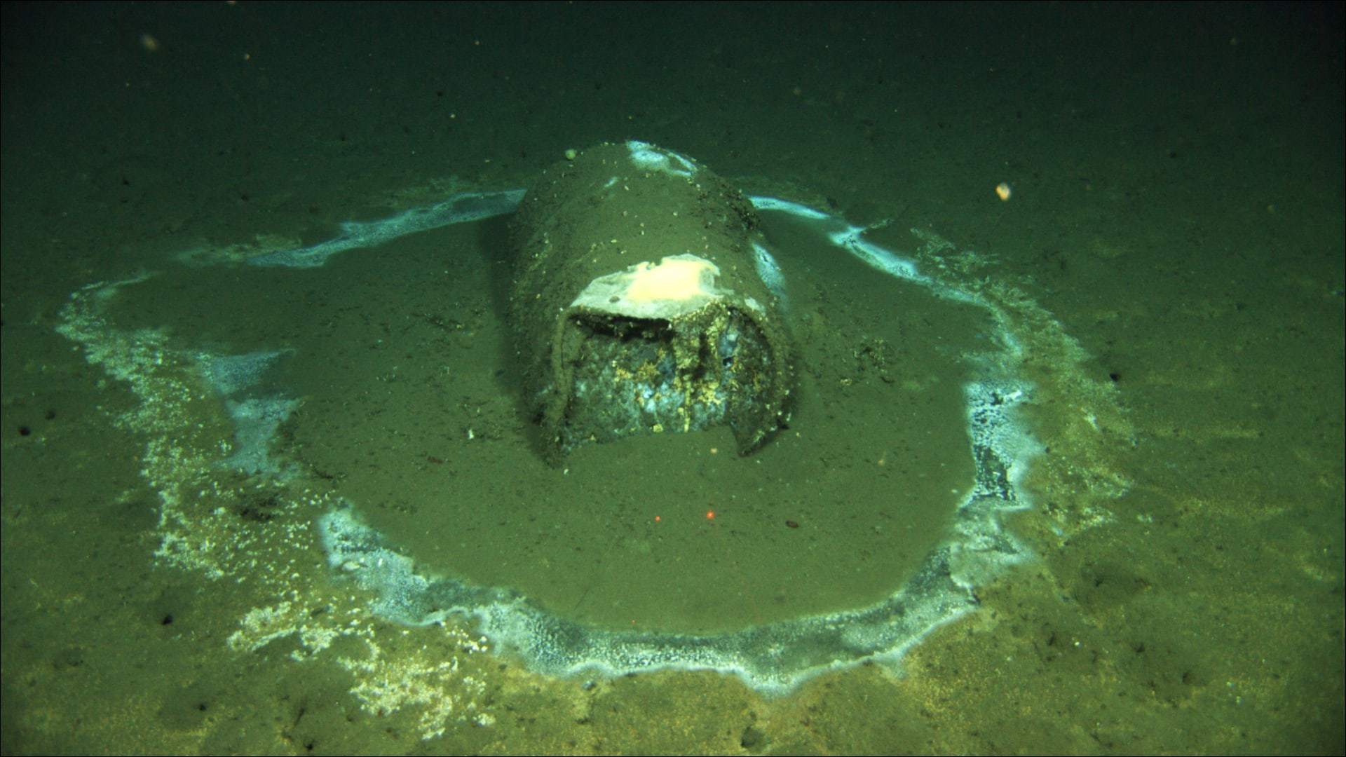 Un barril de DDT al fons del mar | Universitat de California - Santa Barbara