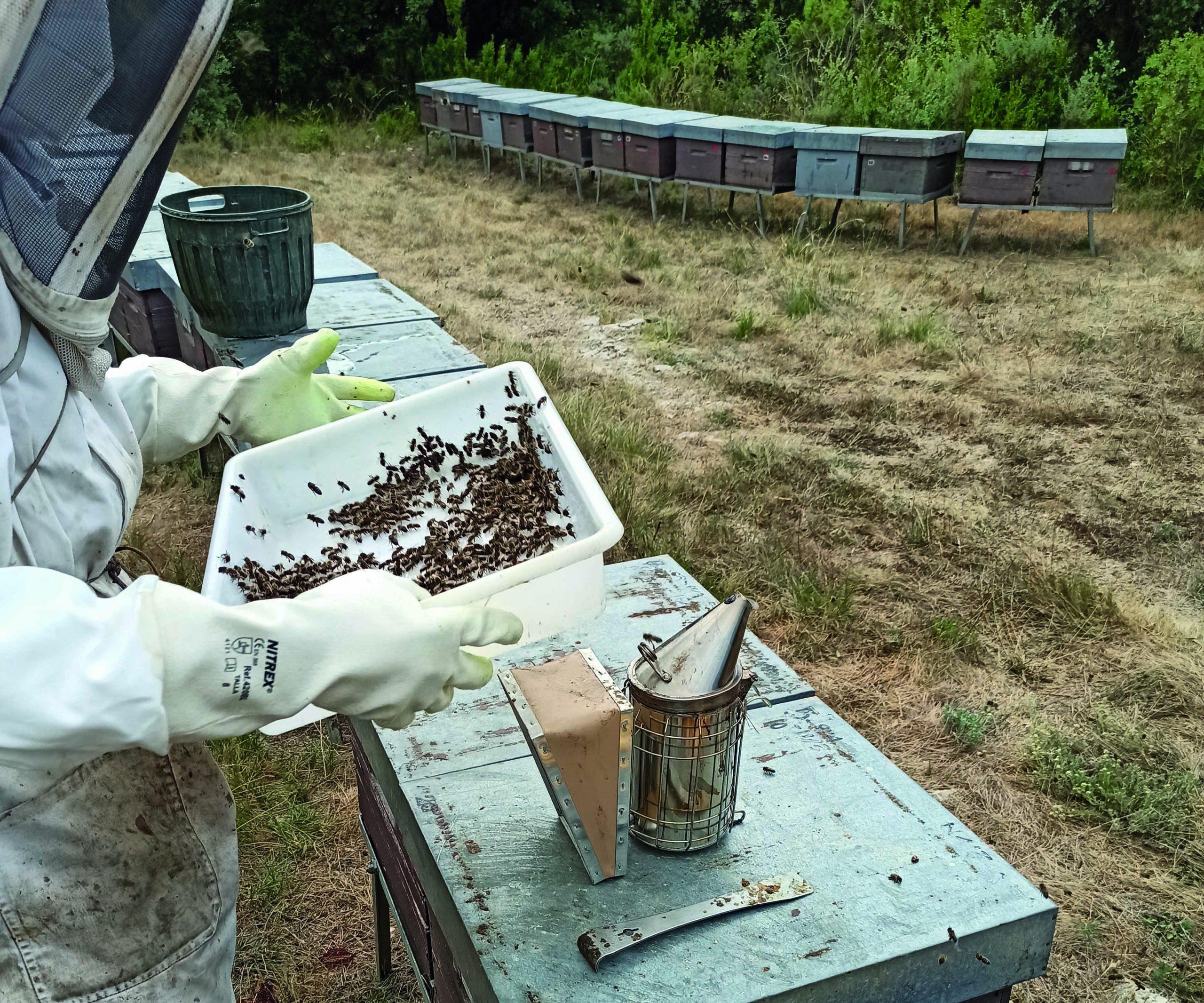 L'apicultor Josetxu Rodríguez treballant amb les abelles | CTFC