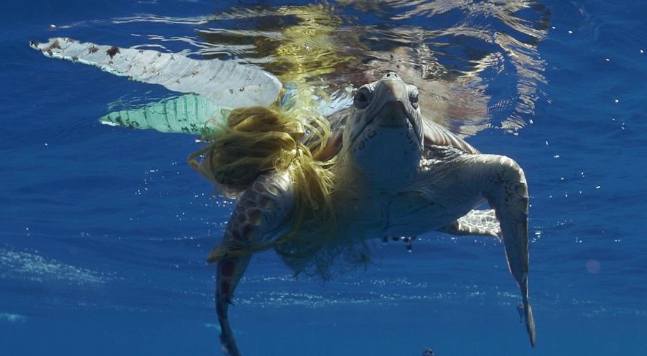 La tortuga Thunderbird   Save the Med