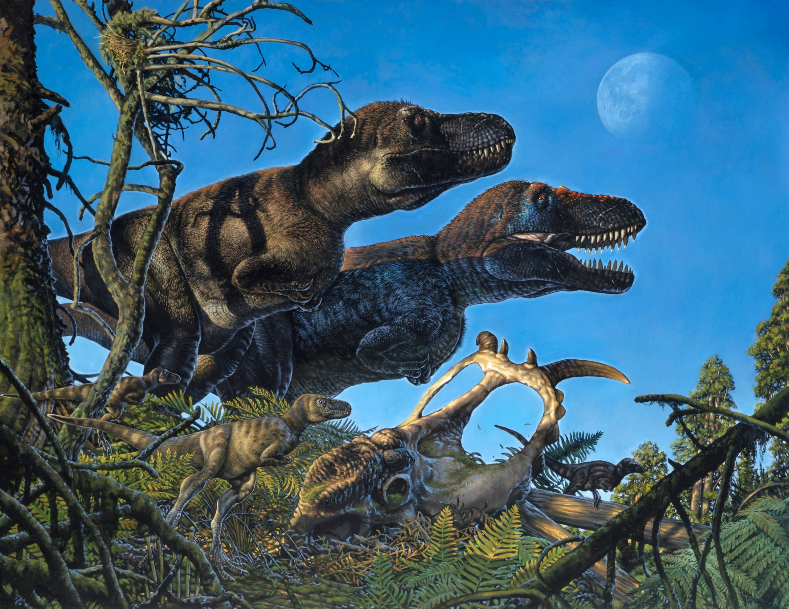 Dinosaures vivint a l'Àrtic | James Havens / University of Alaska Fairbanks