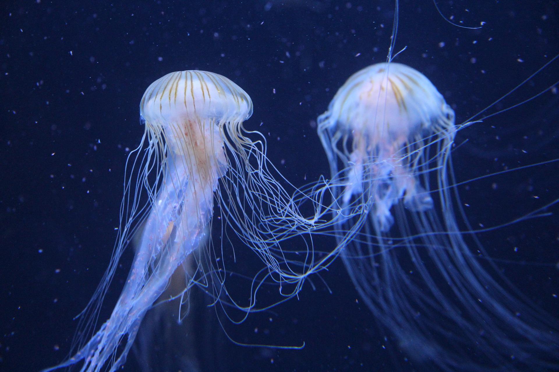 Meduses al mar / Aernout Bouwman / Pixabay