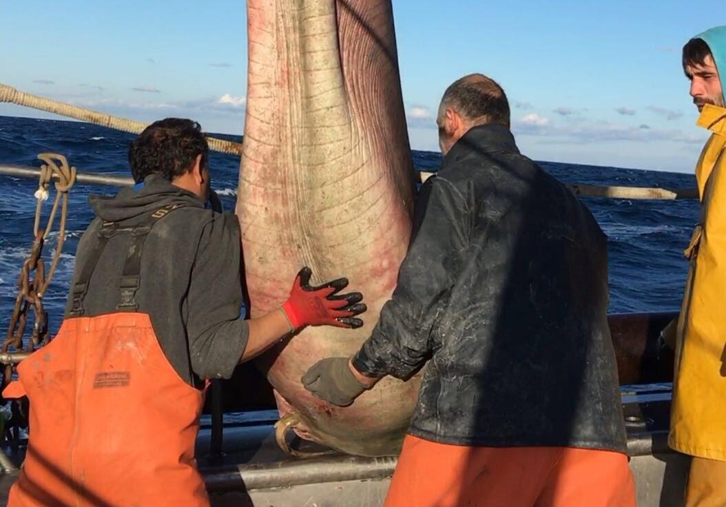 Un tauró atrapat per pescadors | Ignasi Nuez / Submón
