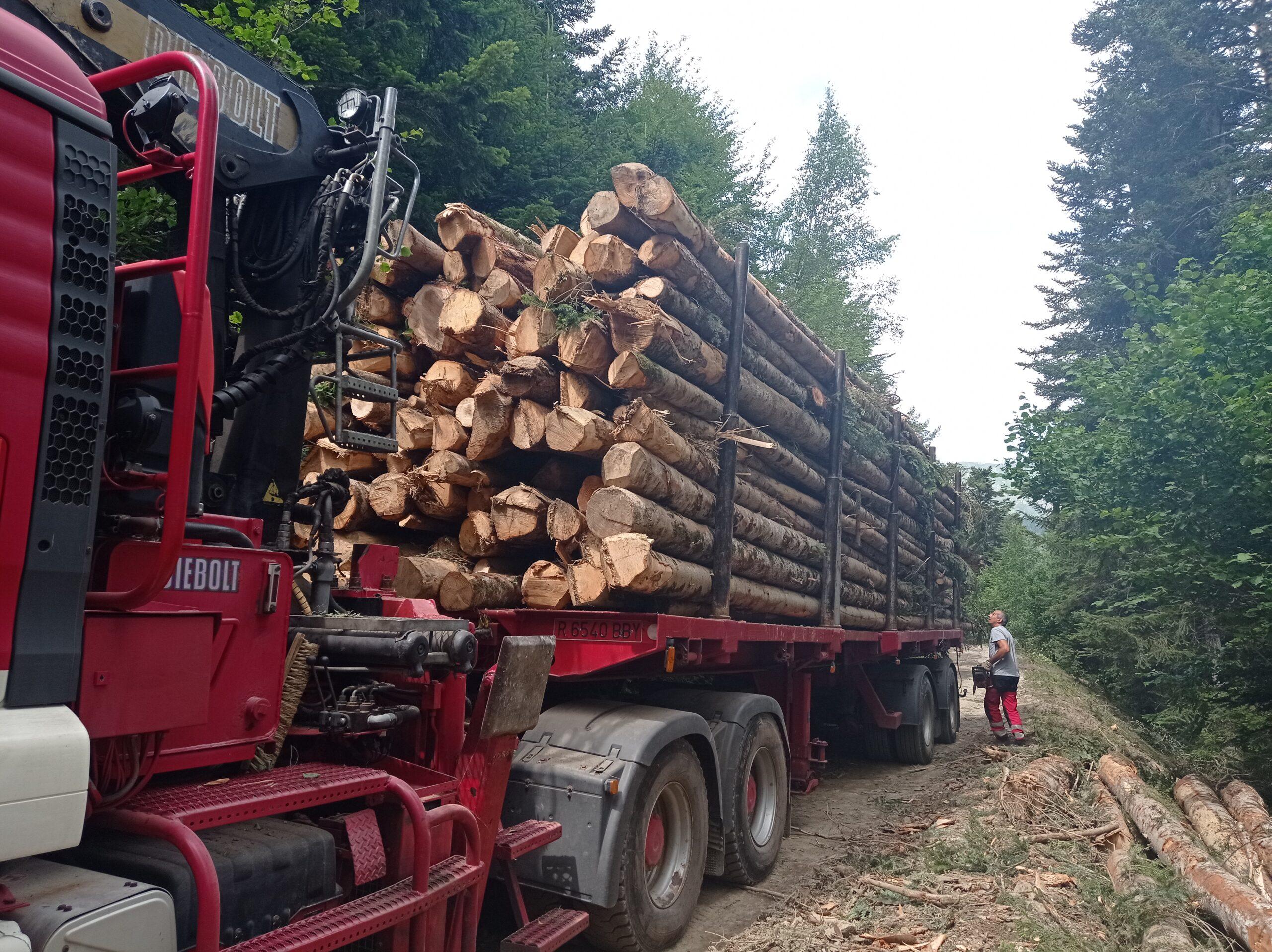 Arbres talats a la pista forestal de Tuca-Pontet, a la Val d'Aran, per aprofitar-ne la fusta | ACN