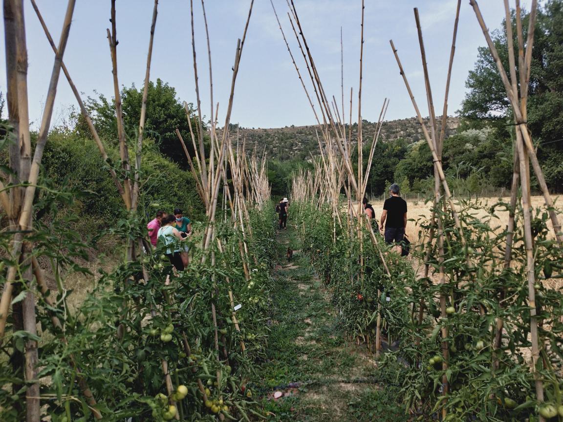 Les varietats locals de fruites, verdures i hortalisses són una part essencial del patrimoni agrícola de Catalunya | Gencat